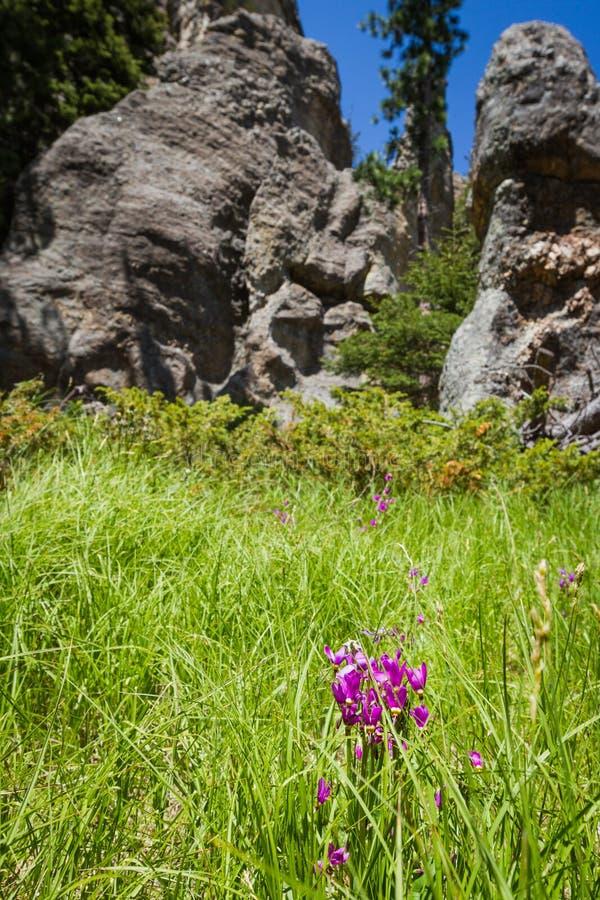 Caminhando em Custer State Park, South Dakota foto de stock royalty free