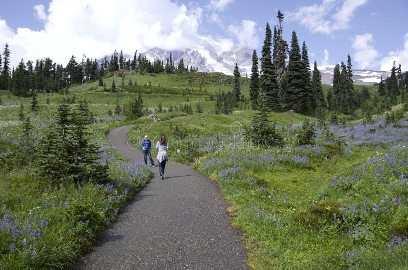 Caminhando em Mt Rainier National Park fotos de stock