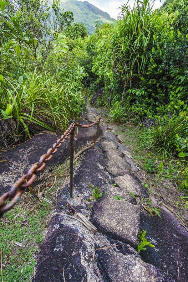Caminhando a fuga do copolia, o granito balança na selva no mahé, s foto de stock
