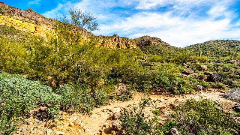 Caminhando na fuga da caverna do vento da montanha colorida de Usery cercada por grandes pedregulhos, por Saguaro e por outros ca imagem de stock royalty free