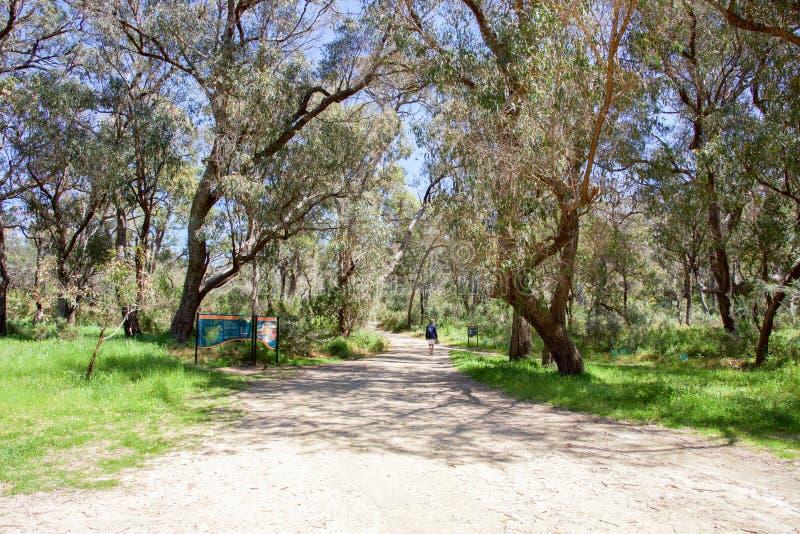 Caminhando o parque corajoso Bushland fotos de stock