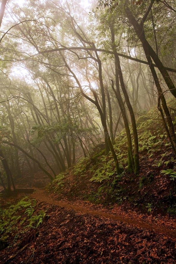 Caminhando o trajeto através da floresta nevoenta fotografia de stock royalty free