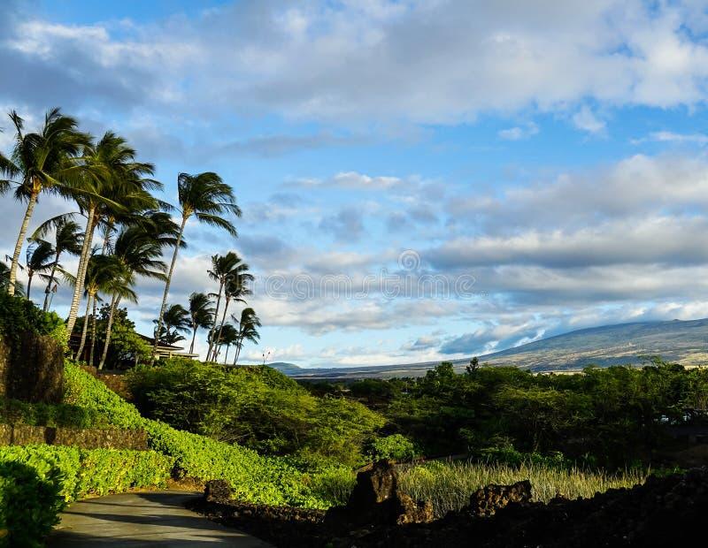 Caminhando o trajeto com palmeiras foto de stock