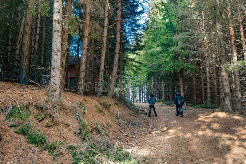 Caminhando povos da família na estrada rural do trajeto na montanha entre o pinho do outono fotos de stock