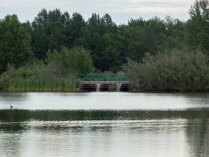 Caminhando sobre um lago fotografia de stock royalty free