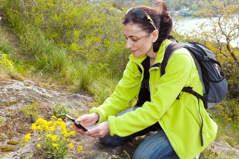 Caminhante da mulher que toma fotografias de flores selvagens fotografia de stock