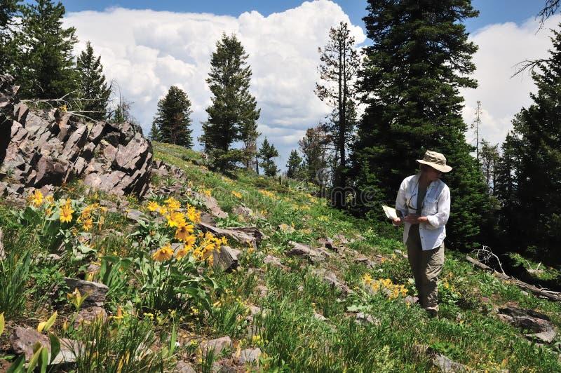 Caminhante e wildflowers foto de stock