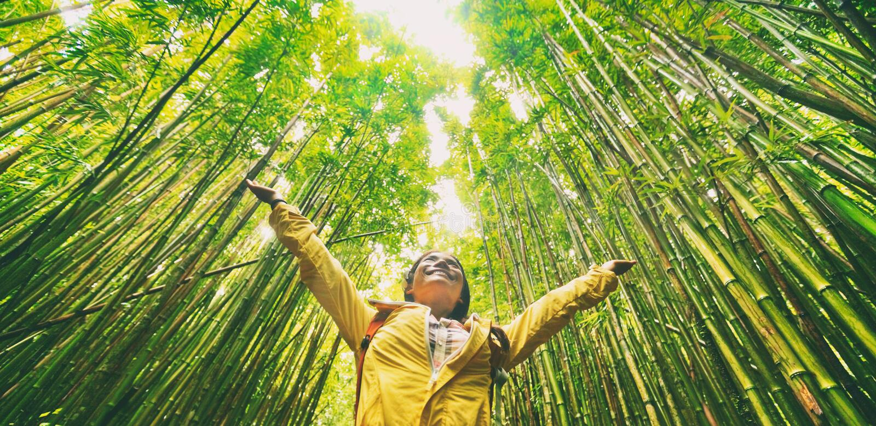 Caminhante eco-amigável sustentável do turista do curso que anda na floresta de bambu natural feliz com braços acima na apreciaçã foto de stock royalty free