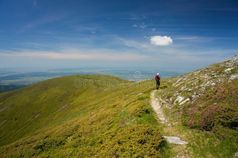 Caminhante em um trajeto nas montanhas foto de stock royalty free