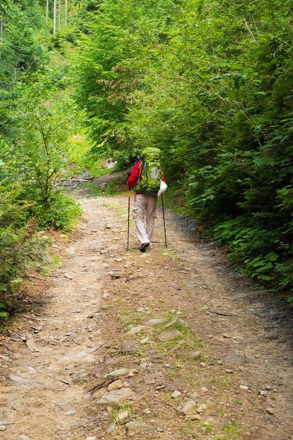 Caminhante na floresta foto de stock royalty free