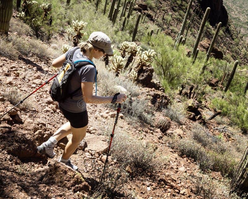 Caminhante no parque nacional de Saguaro imagem de stock