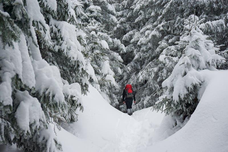 Caminhante que trekking no inverno imagens de stock royalty free