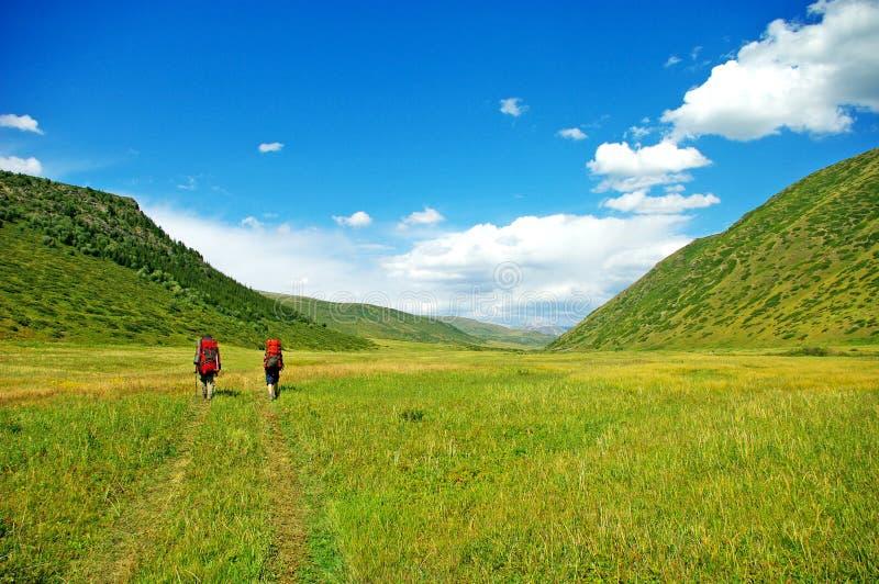 Caminhantes com trouxas que andam através de um prado com grama luxúria imagem de stock