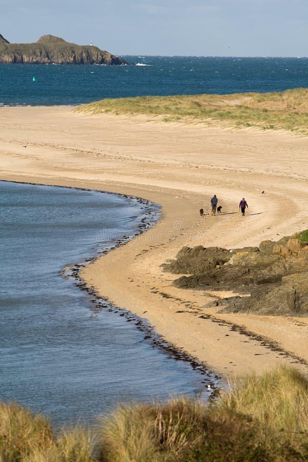 Caminhantes do cão na praia imagem de stock royalty free
