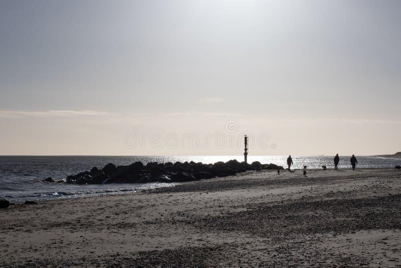 Caminhantes do cão na praia em uma manhã do inverno fotografia de stock