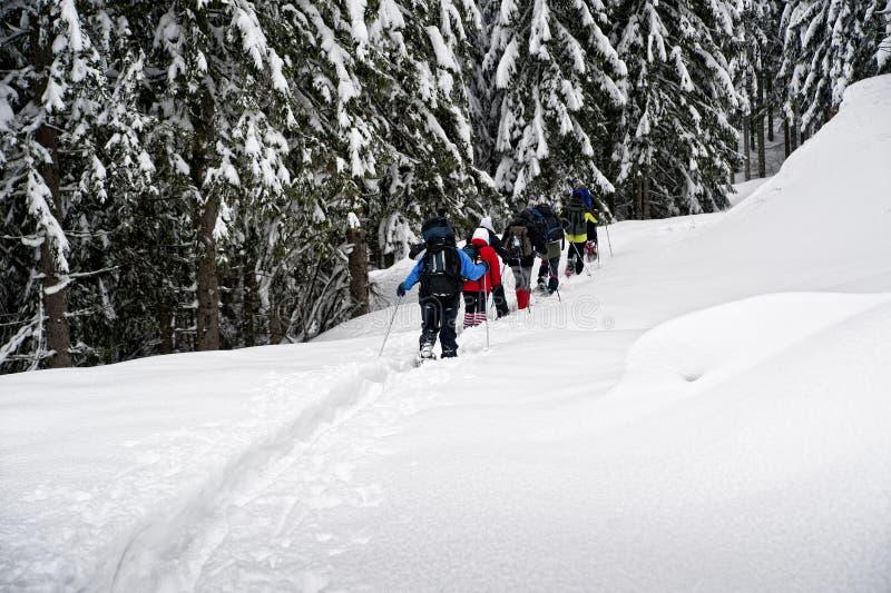 Caminhantes do Snowshoe foto de stock