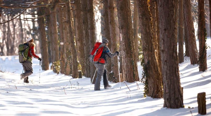 Caminhantes na madeira fotos de stock royalty free