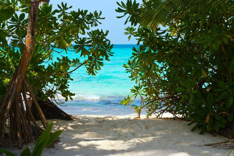 Caminho à praia tropical imagem de stock