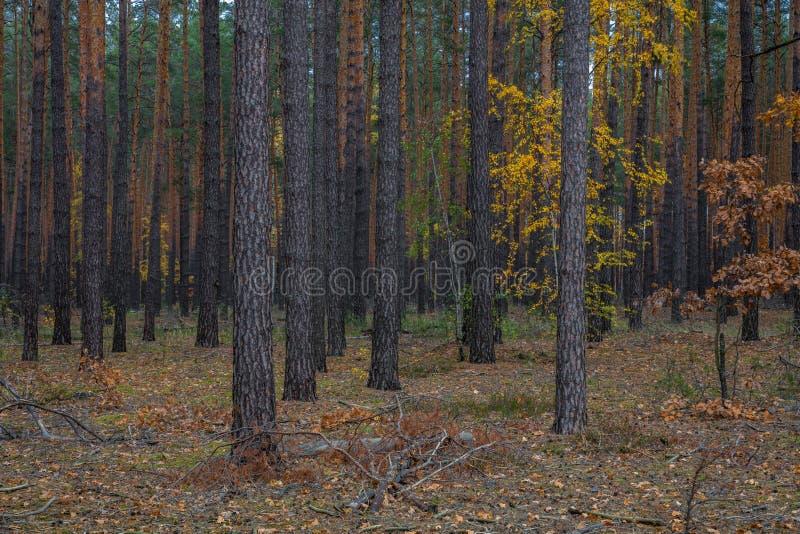 Caminho através da floresta do outono foto de stock
