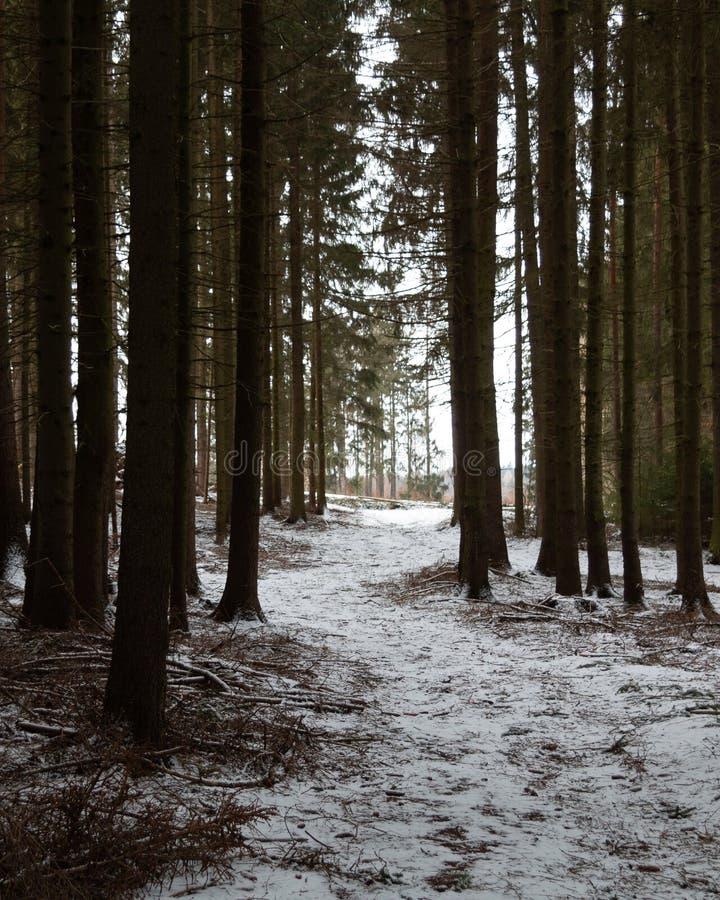 Caminho atrav?s da floresta fotos de stock