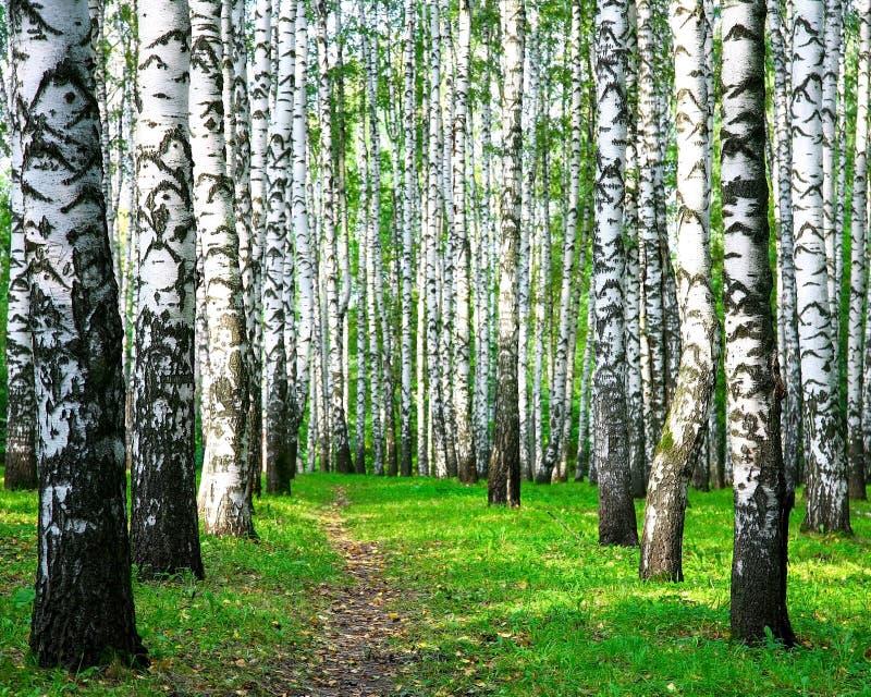 Caminho caminhando em uma floresta de outono de pássaros fotos de stock