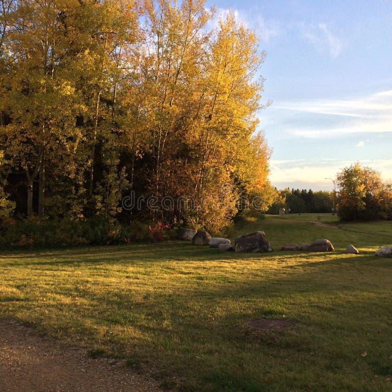 Caminho com árvores e rochas do outono imagens de stock