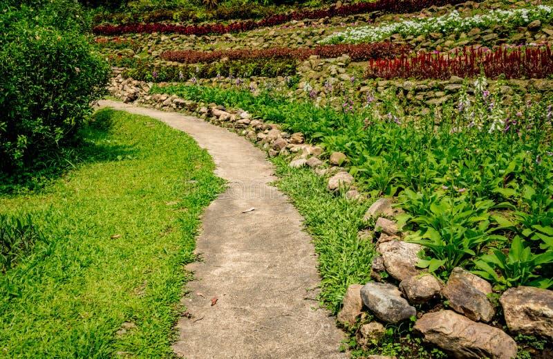 Caminho concreto no jardim fotos de stock royalty free