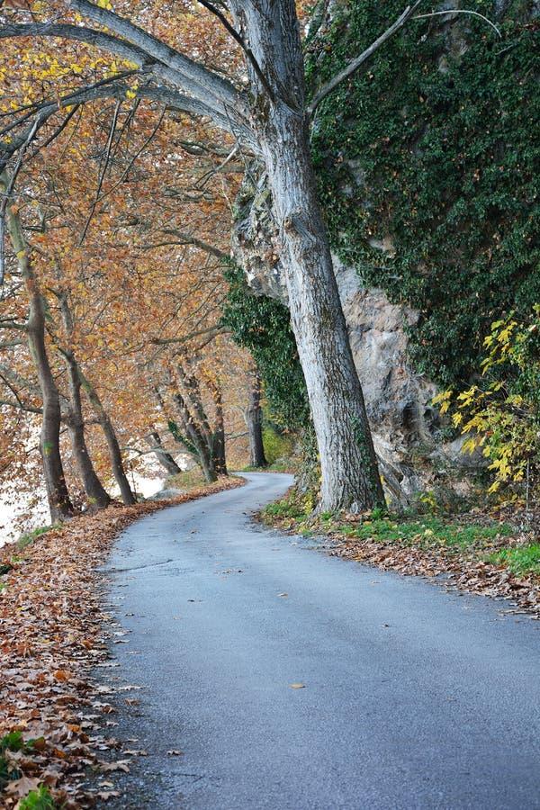 Caminho da árvore plana imagens de stock