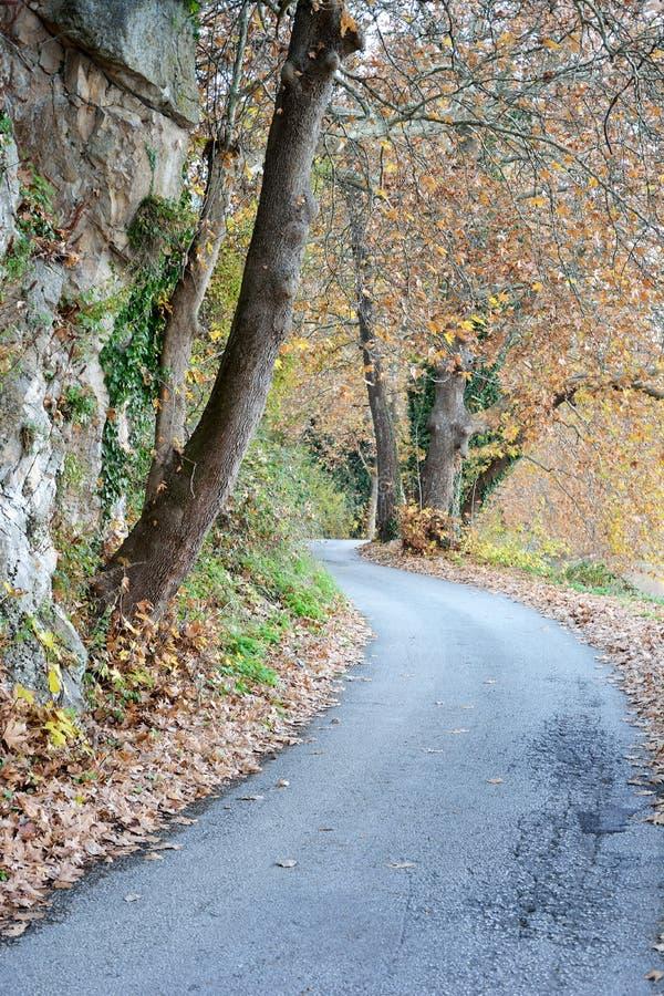 Caminho da árvore plana imagens de stock royalty free