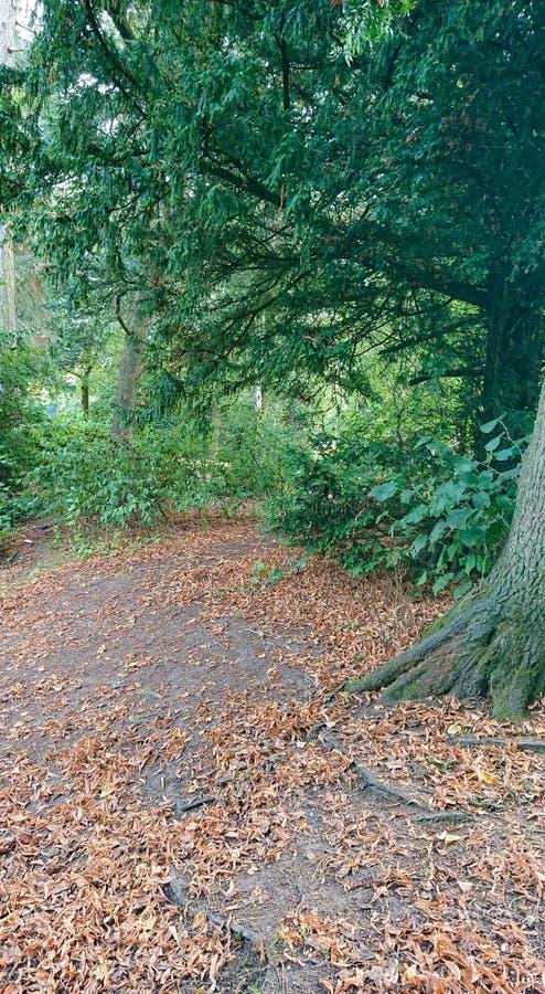 Caminho da floresta do outono imagem de stock