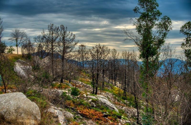 Caminho das florestas do outono Floresta no outono fotos de stock royalty free