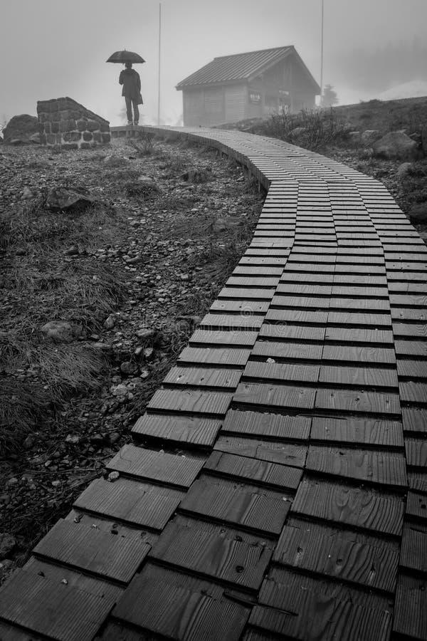 Caminho de madeira fotografia de stock