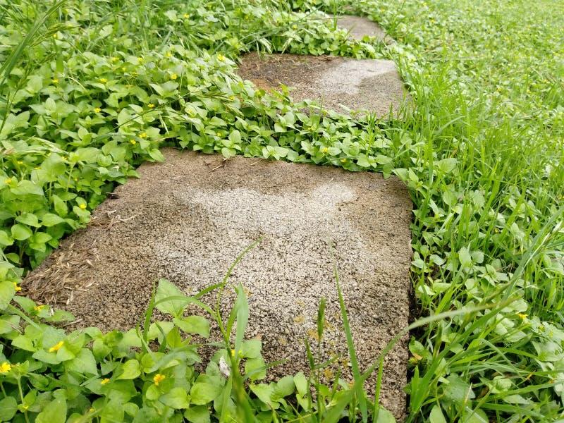 Caminho de pedra concreto na grama imagens de stock