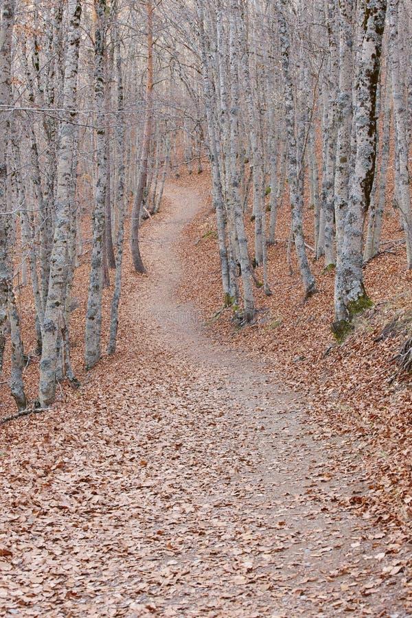 Caminho em uma paisagem da floresta da faia do outono Tejera Negra spain fotografia de stock royalty free