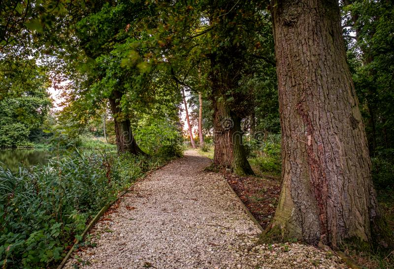 Caminho gravado através de madeira imagens de stock royalty free