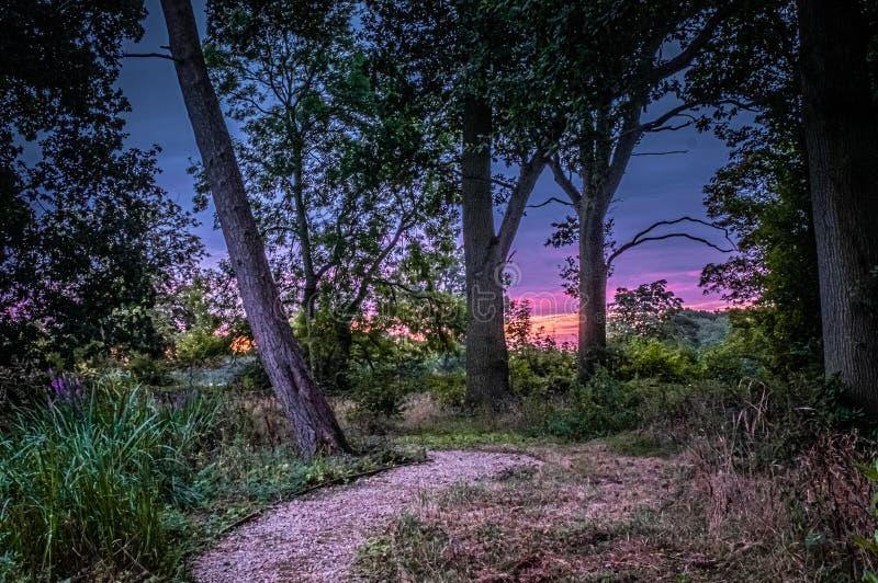 Caminho gravado em madeira rumo ao nascer do sol fotografia de stock royalty free