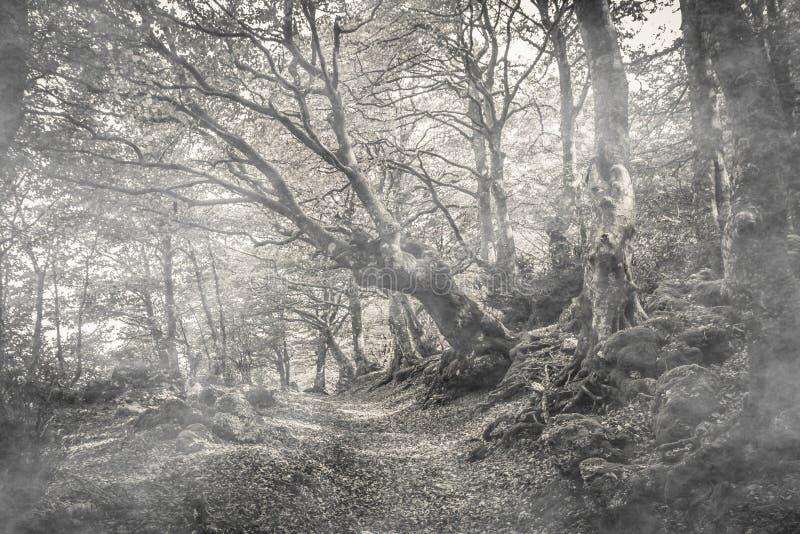Caminho na floresta da mística com névoa, parque de Monte Cucco imagem de stock