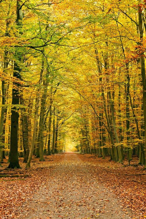 Caminho na floresta do outono fotografia de stock