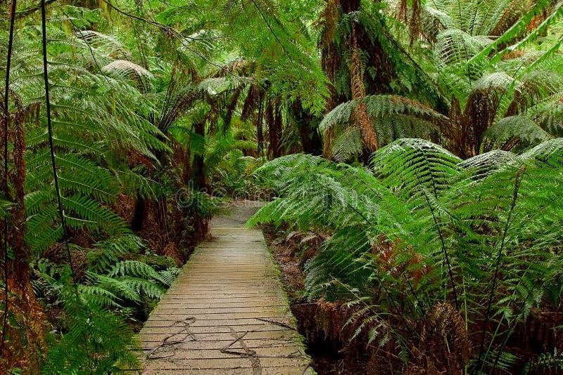 Caminho na floresta tropical foto de stock royalty free