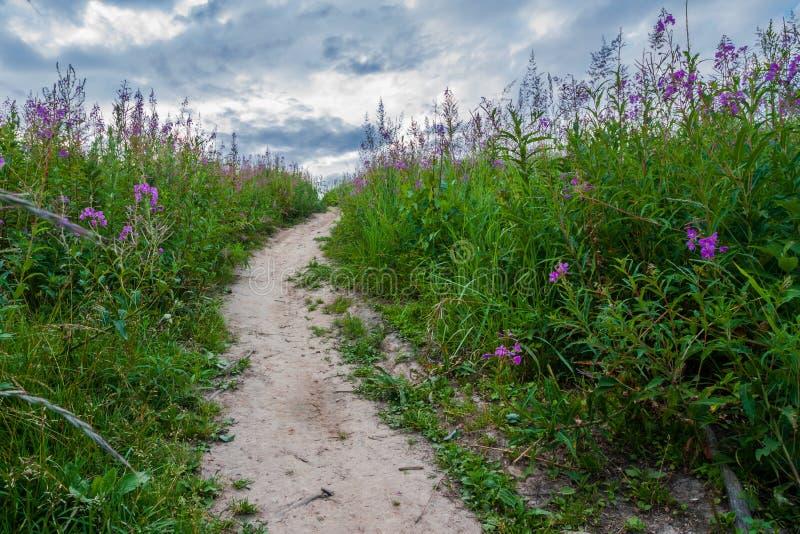Caminho na grama com as flores violetas do megenta fotografia de stock
