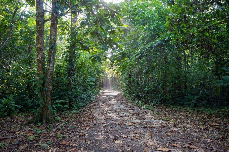 Caminho na selva fotos de stock