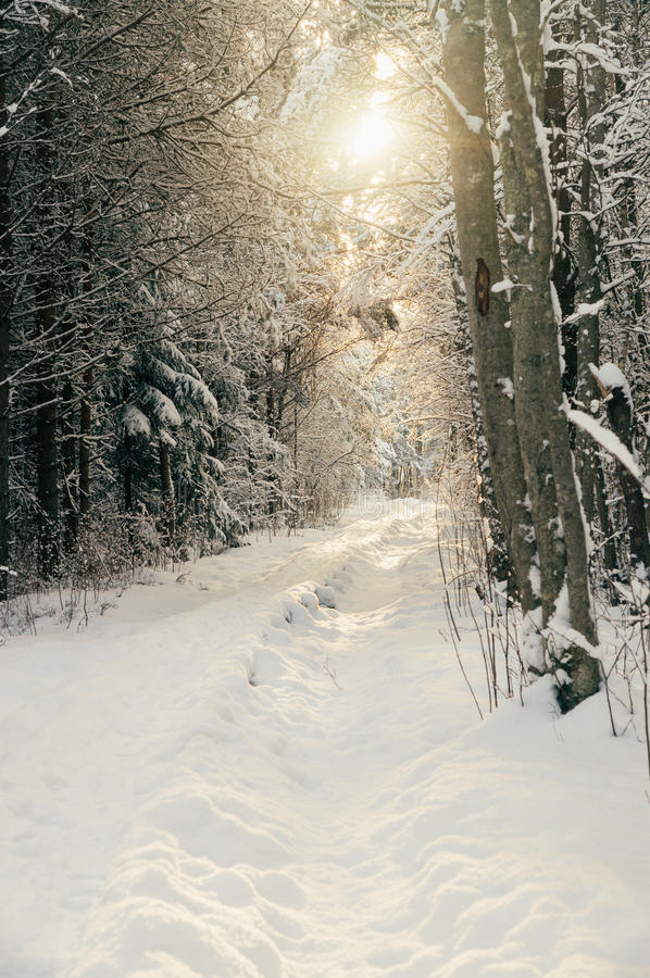 Caminho nevado ensolarado na floresta invernal imagens de stock
