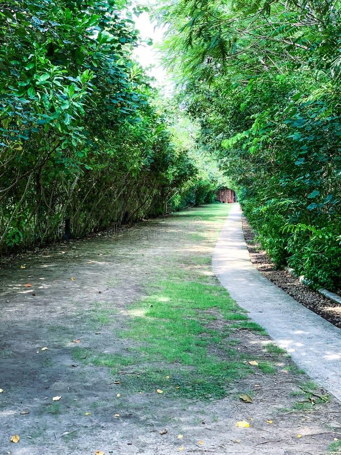 Caminho no jardim, alpondras no gramado da grama imagens de stock