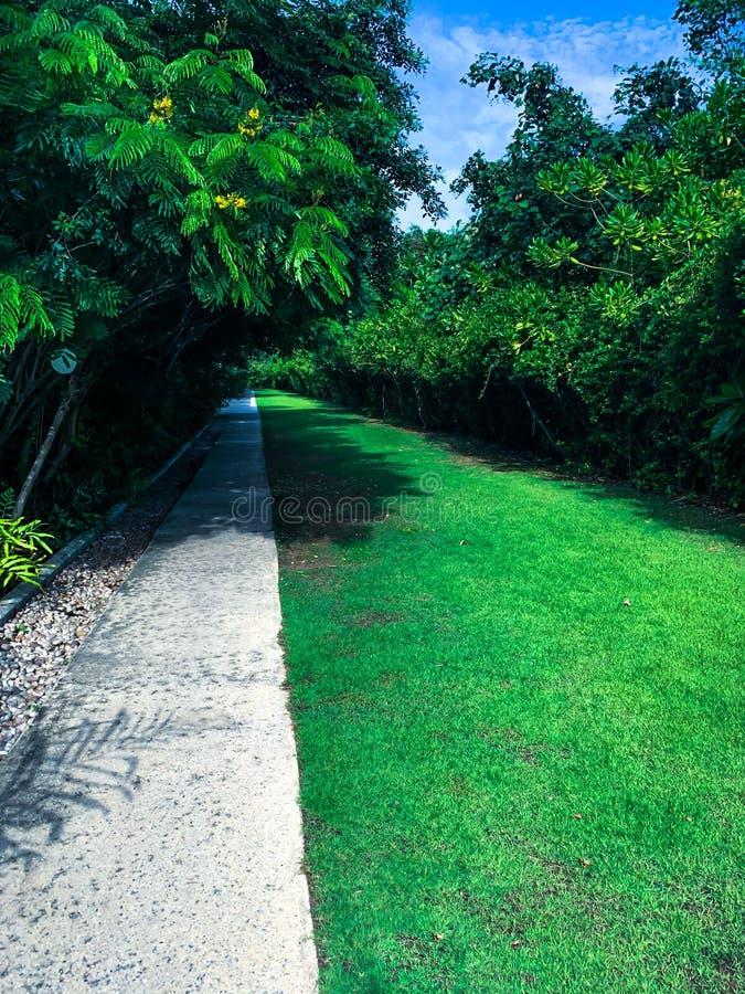 Caminho no jardim, alpondras no gramado da grama fotografia de stock royalty free