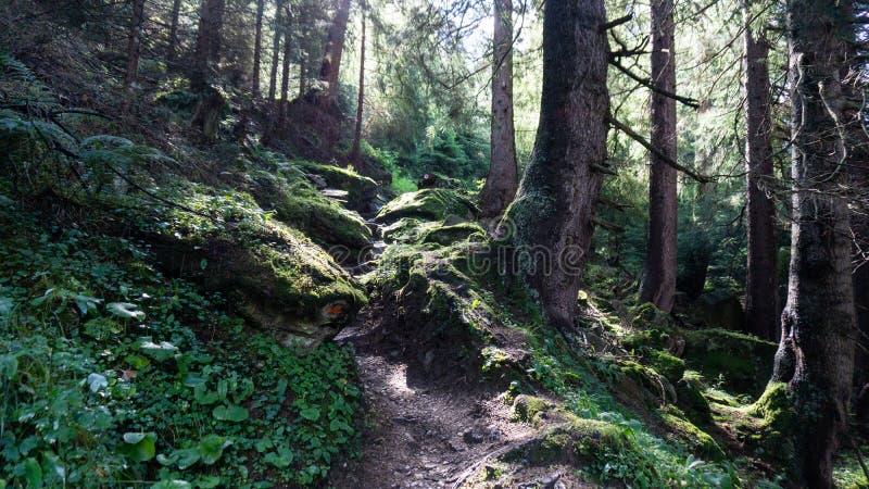 Caminho selvagem pela floresta fotos de stock royalty free