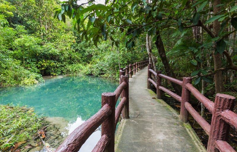 Caminho situado na floresta profunda sobre a lagoa azul natural imagens de stock royalty free