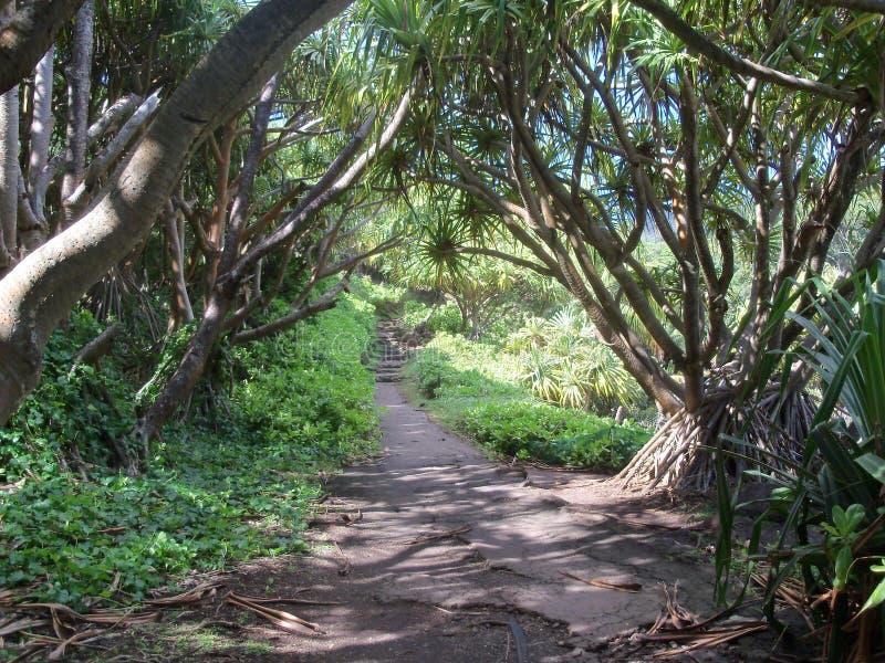 Caminho tropical imagem de stock