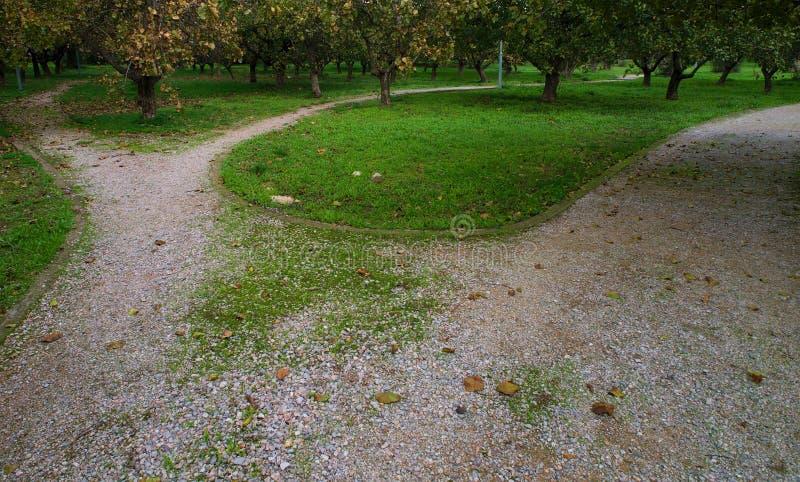 Caminhos curvados parque do solo com árvores fotos de stock royalty free