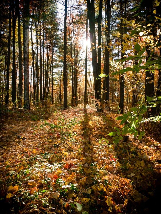 Caminhos da floresta fotografia de stock