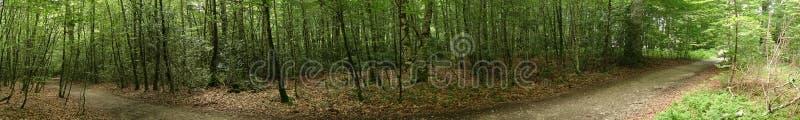 Camino的de圣地亚哥森林在奥雷亚加 免版税库存照片